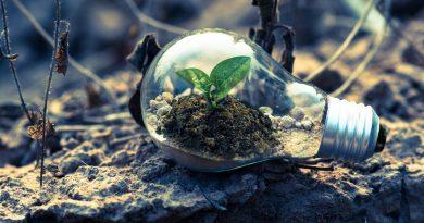 Por que preservar a natureza que muitos destroem?